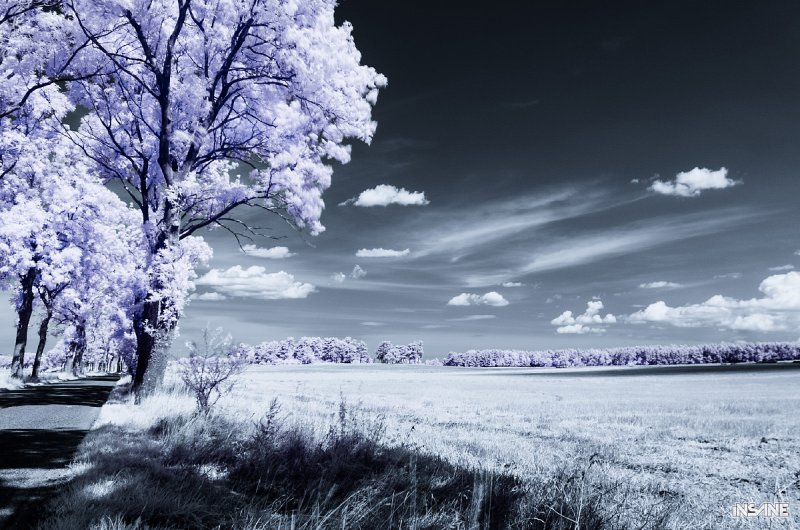 Infrared meadow, Northern Poland