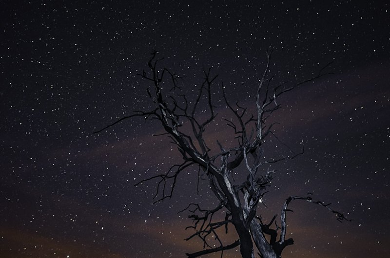 Old tree at night